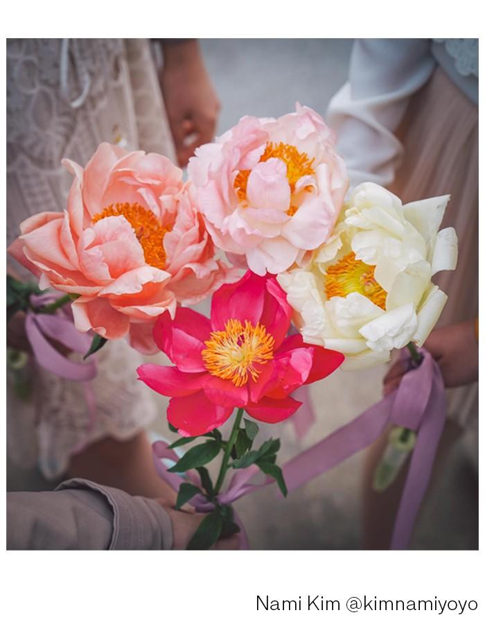 Flower Talk, Pfingstrosen