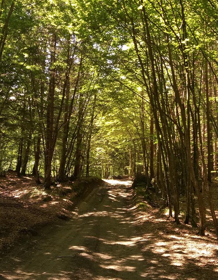Typischer Mischwald mit hohen Rot- und Hainbuchenanteil